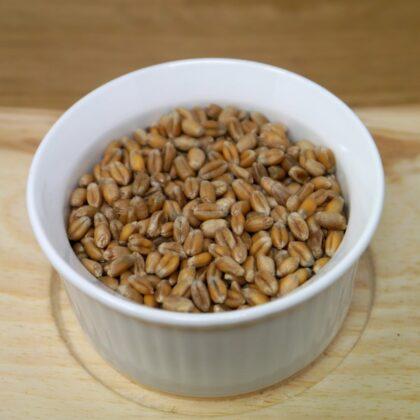 Weizenkorn in Schale